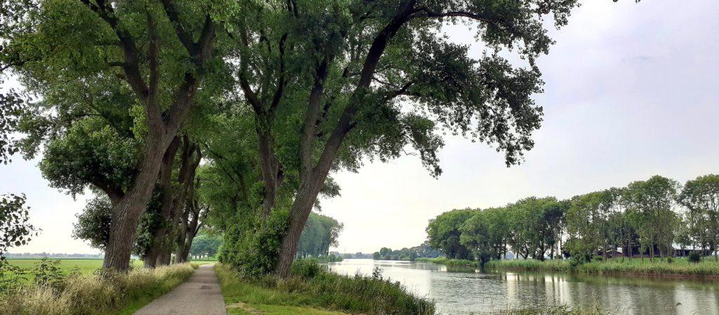 Weg met bomen langs water